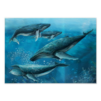 Coral Reef Whales Poster
