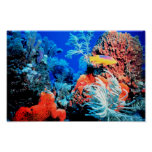 Coral Reef World Poster