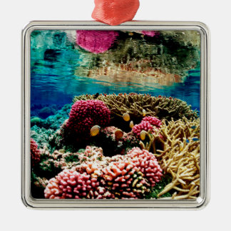 CORAL REEFS 1 CHRISTMAS ORNAMENTS