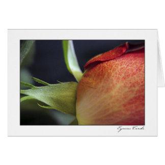 Coral Rose Card