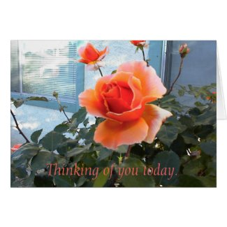 Coral Rose Card, Thinking of you today.