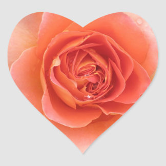 Coral Rose Heart Sticker