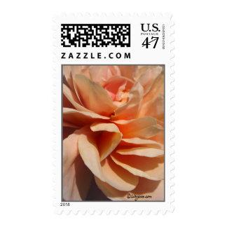 Coral Rose Petals Wedding Postage