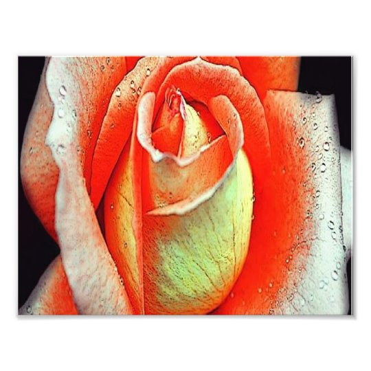 Coral Rose Photo Print