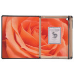 Coral Rose Photograph iPad Cases