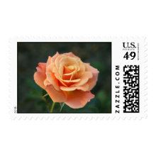 Coral Rose U.S. Postage Stamps