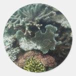 Coral Round Sticker