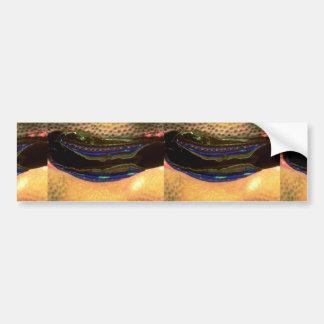 Coral scallop embedded in hard coral car bumper sticker