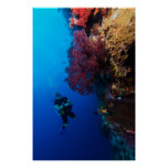 Coral Sea - Diver and Soft Coral - Poster