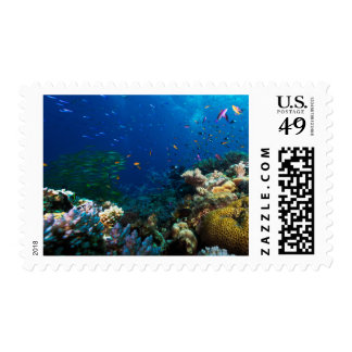 Coral Sea Postage Stamp