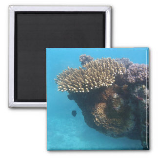 Coral Seascape 2 Inch Square Magnet