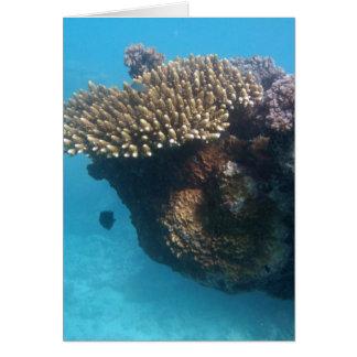 Coral Seascape Card