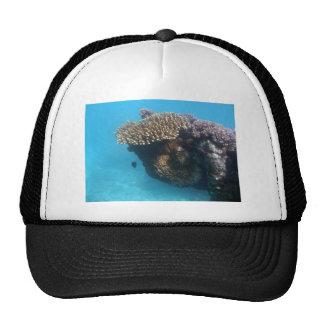 Coral Seascape Trucker Hat
