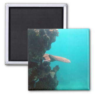 Coral Shelf 2 Inch Square Magnet