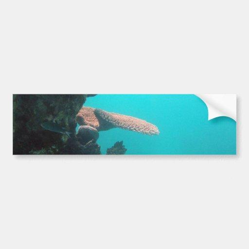 Coral Shelf Bumper Sticker
