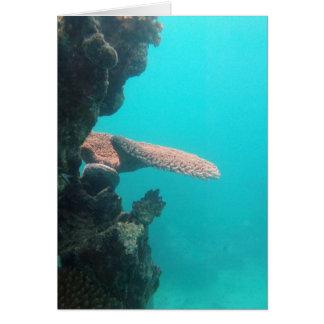 Coral Shelf Card