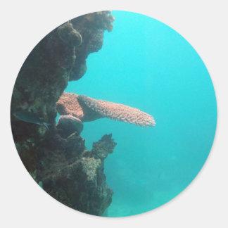 Coral Shelf Classic Round Sticker