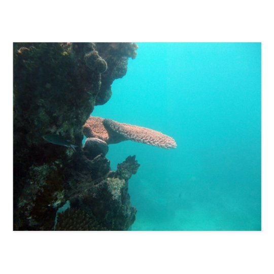Coral Shelf Postcard