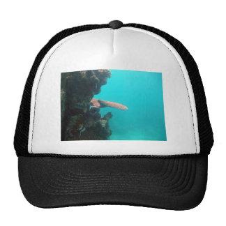 Coral Shelf Trucker Hat