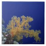 Coral subacuático azulejo cuadrado grande