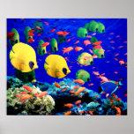 Coral subacuático del mar y pescados tropicales poster