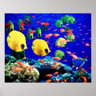 Coral subacuático del mar y pescados tropicales póster