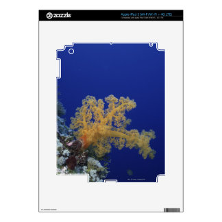 Coral subacuático pegatinas skins para iPad 3