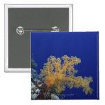 Coral subacuático pin cuadrada 5 cm