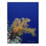Coral subacuático postales