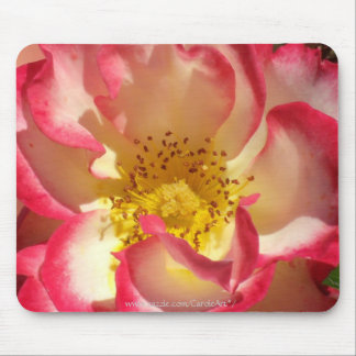 Coral-Tinged Rose Mousepad