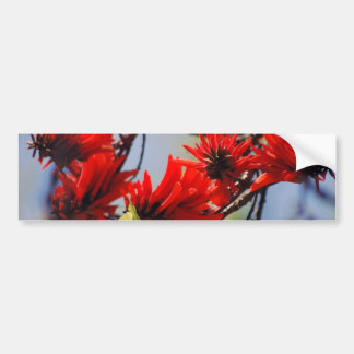 Coral tree rose flower bumper sticker