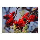 Coral tree rose flower greeting card