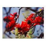 Coral tree rose flower post card
