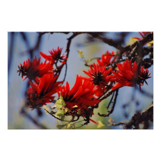 Coral tree rose flower poster