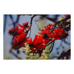 Coral tree rose flower posters