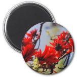 Coral tree rose flower refrigerator magnets