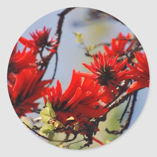 Coral tree rose flower stickers