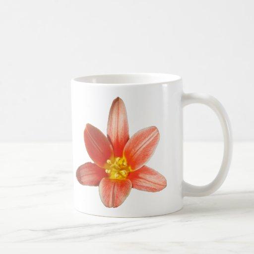Coral Tulip ~ mug