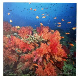 Coral y pescados azulejo cuadrado grande