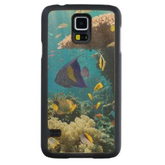 Coral y pescados en el Mar Rojo, Egipto Funda De Galaxy S5 Slim Arce