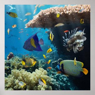 Coral y pescados en el Mar Rojo, Egipto Póster
