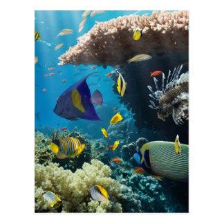 Coral y pescados en el Mar Rojo, Egipto Tarjeta Postal