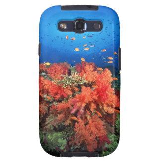 Coral y pescados galaxy SIII protector