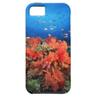 Coral y pescados iPhone 5 funda