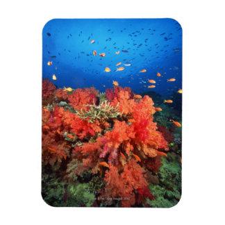 Coral y pescados iman flexible
