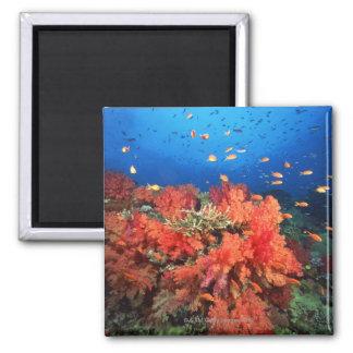 Coral y pescados imán cuadrado