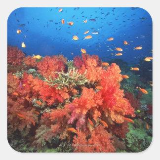 Coral y pescados pegatina cuadrada