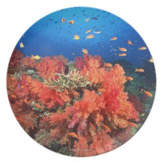Coral y pescados plato de cena