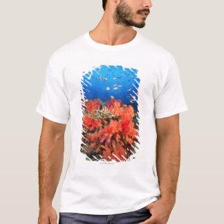 Coral y pescados playera