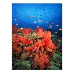 Coral y pescados postales